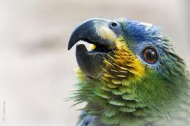6ab88-papagaioreal.jpg